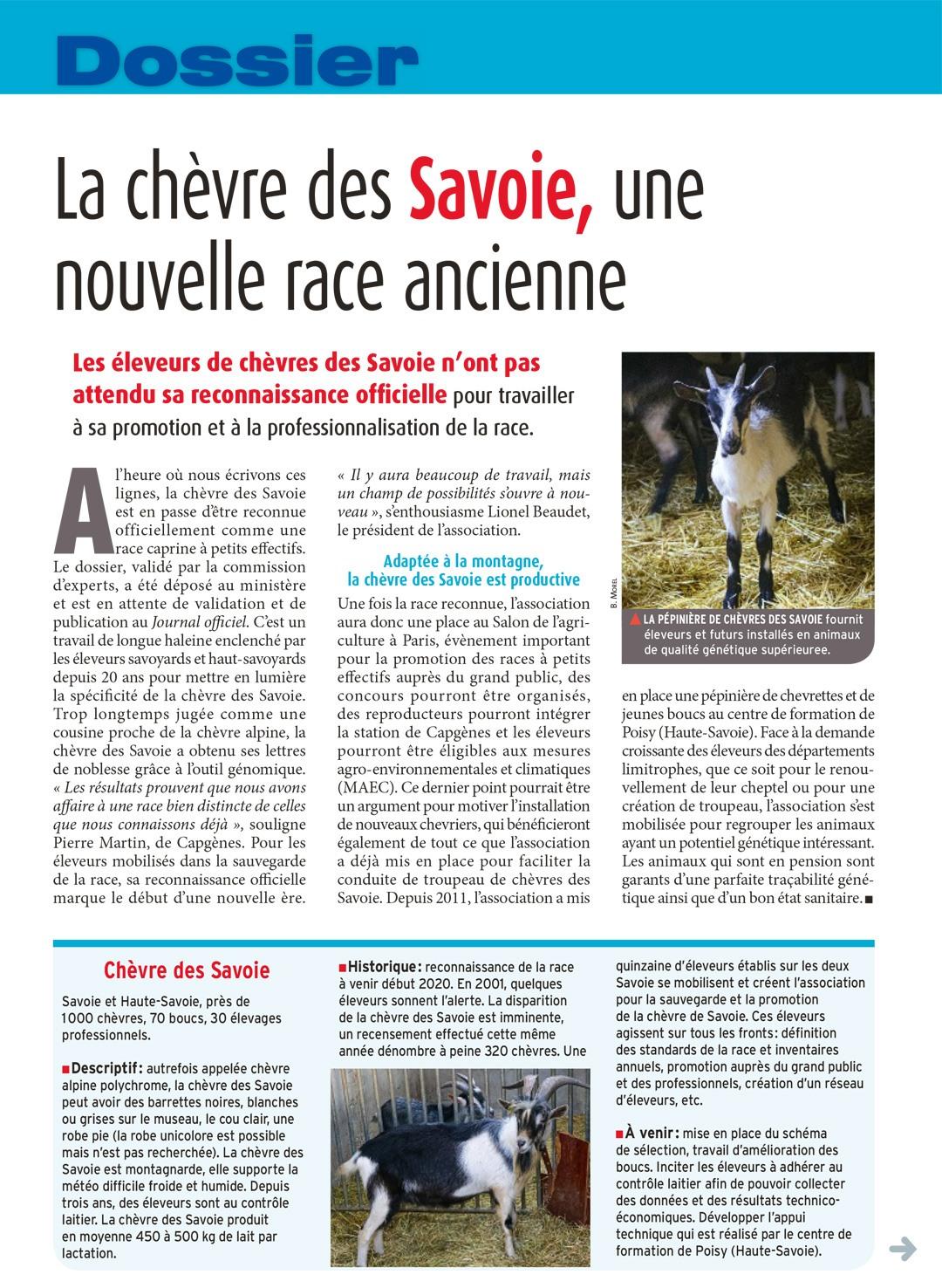 La chèvre des Savoie, une nouvelle race ancienne